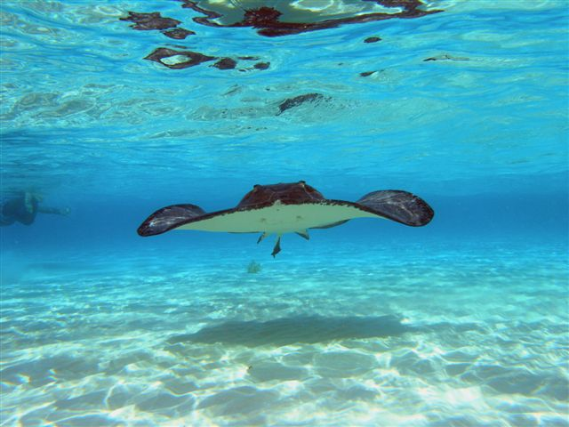 By Stingray City